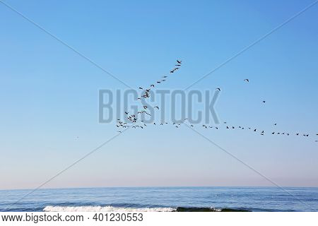 A Flock Of Migrating Birds In The Sky Above The Sea. Seasonal Migration Of Birds. Soft Selective Foc