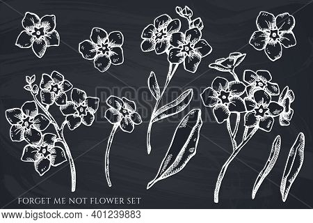 Vector Set Of Hand Drawn Chalk Forget Me Not Flower Stock Illustration