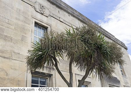 Weston-super-mare, Uk - July 5, 2019: A Palm Tree Outside A Disused Building That Was Once The Town'