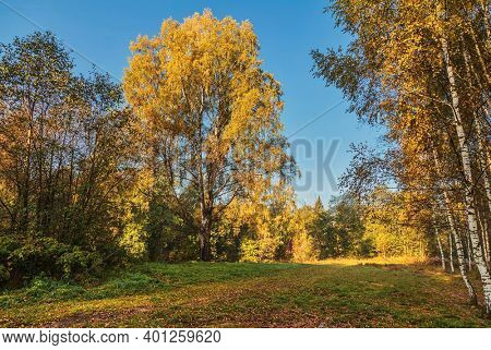 Autumn landscape, bush and trees on a meadow with dry grass
