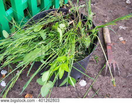 Weed Bucket And Garden Path Weeding Tool