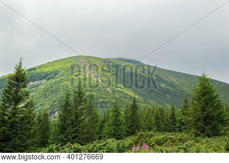 Summer Day In The Mountains. Beautiful Mountain Landscape. Ukrainian Carpathians, Mount Hoverla