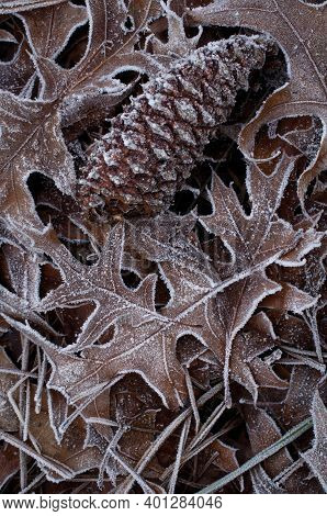 Frosted Leaves With Pinecone In Macro Closeup View