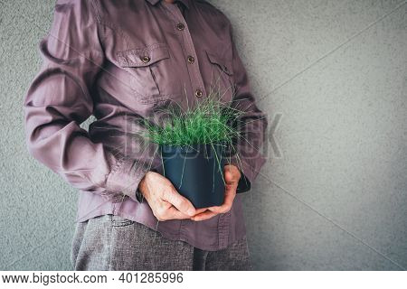 Woman In Purple Shirt Holding A Pot With Green Decorative Grass.