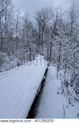 Snow Covered Boardwalk In Rattray Marsh Conservation Area