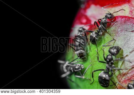 Close up shots of ants on a flower bud with selective focus