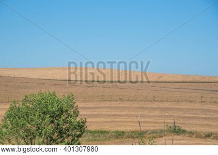 Rural Landscape. Fields Of Soy Cultivation. No-till Technique In Southern Brazil. Grain Cultivation