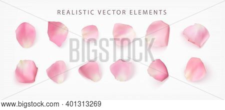 Realistic Vector Elements Set Of Rose Petals. Pink Petals Of Rose Flower Isolated On White.