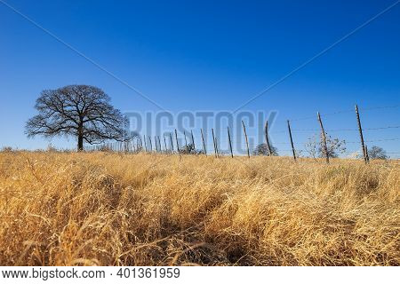 Texas Farmland, Grassland Landscape On A Beautiful, Sunny Winter Day. Bright Blue Sky With Copy Spac
