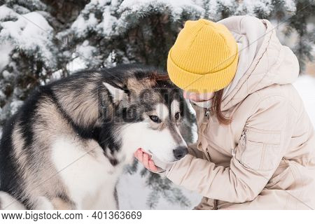 Woman Pet With Love Alaskan Malamute In Winter Forest. Close Up.