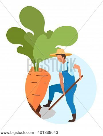 Root Crops Harvesting Flat Concept Icon. Farm Worker, Farmer Digging Carrot. Autumn Harvest Sticker,