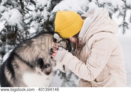 Woman Face To Face With Alaskan Malamute In Winter Forest. Dog