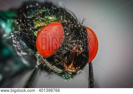Extreme close up shot of house fly