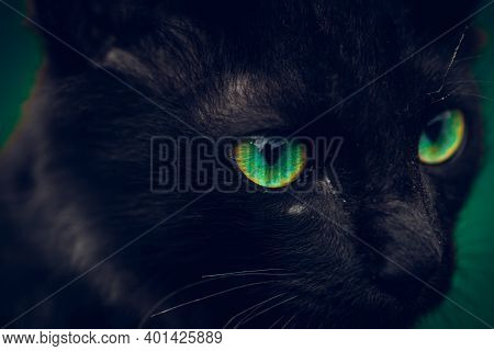 Black Cat With Vibrant Green Eyes Pops In The Dark, Young Small Cat Eyes Sharp Focused In Front, Int