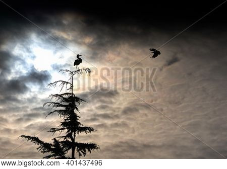 Silhouette Heron And Crow. A Great Blue Heron Perched On A Tree And A Crow At Sunrise In Richmond, B