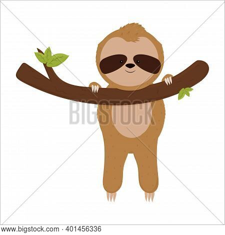 Cute Sloth Hanging On Brunch, Happy And Smiling Bear Isolated On White Background In Cartoon Style.