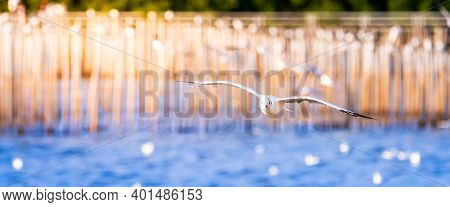 Cinemascope Image. One Seagull Flies Over The Surface Of The Sea. The Blue Sea Reflects The Glitteri