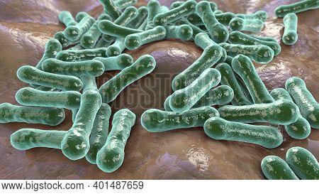 Bacteria Corynebacterium Diphtheriae, Gram-positive Rod-shaped Bacterium That Causes Respiratory Inf
