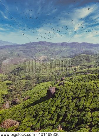 Vertical Panoramic Landscape View Of Tea Plantation At Munnar Tea Gardens With Blue Skies Lovely Clo