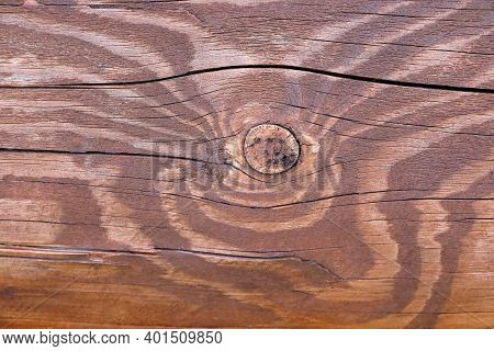 Oak Texture With Bough. Background, Preparation For The Designer