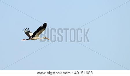 Flying Tropical Bird Heron