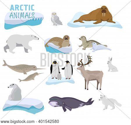 Arctic Creature Cartoon On Blue Background. Polar Animals. Vector Collection Of Polar Animals And Bi