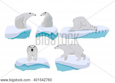 Set Of Adult Polar Bears In Various Poses. Polar Bears Set In Arctic. Northern Animals. Vector Illus