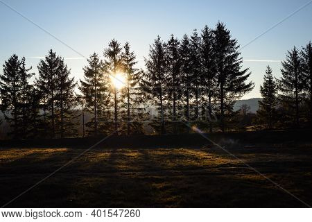 Autumnal Forest Sunset Nature Background Nature Background Autumn Woods Pine Nature Landscape Pine T