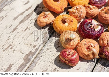 Close Up View Of Lot Of Different Colored Gladiolus Flower Bulbs On Wooden Background Are Ready To B