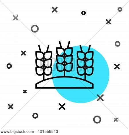 Black Line Cereals Set With Rice, Wheat, Corn, Oats, Rye, Barley Icon Isolated On White Background.