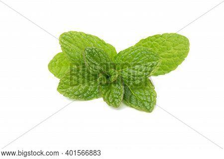 Fresh Spearmint Isolated On White Background. Mint, Natural Medicine, Peppernint