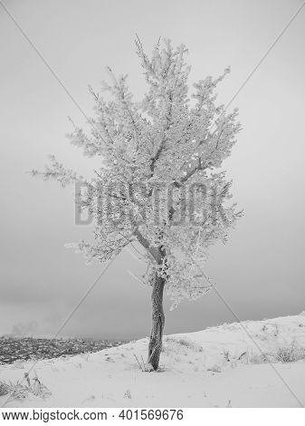 Single Tree In A Solitude Winter Landscape.