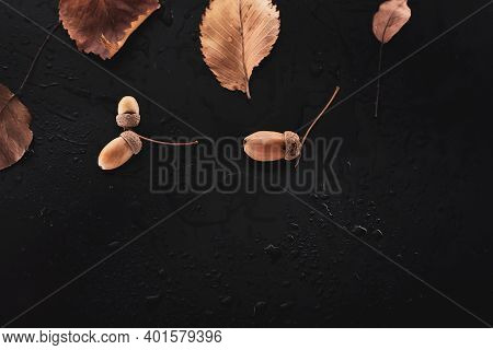 Dry Leaves And Acorns On A Wet Background