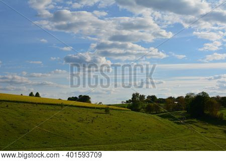 Panoramic Flower Field In Spring, Beautiful Landscapes Of Ukraine