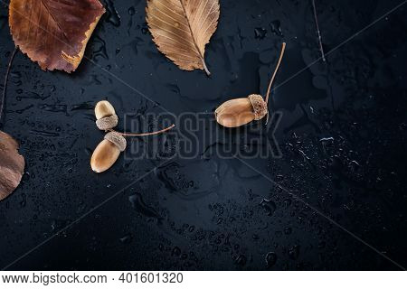 Autumn Background. Acorns And Leaves On A Wet Background