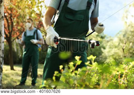 Workers Spraying Pesticide Onto Green Bush Outdoors, Closeup. Pest Control