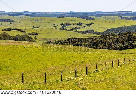 Farm Field With Araucaria Forest