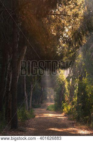 Early Morning Sunbeams Sunrays Shining Through Trees In Autumn. Morning Bright Light