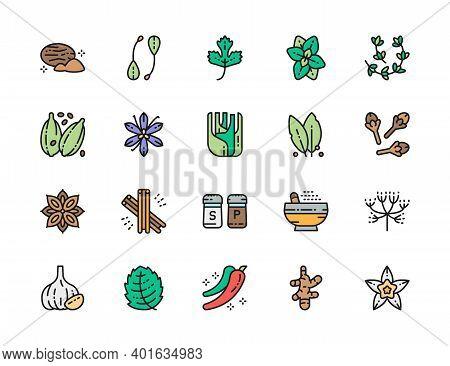 Set Of Flat Color Line Icons. Nutmeg, Parsley, Oregano, Cardamom And More.