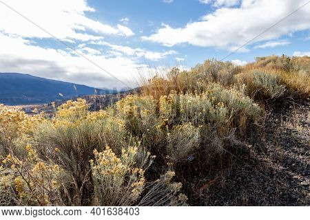 Tumble Weeds And Grass With View Of The Mountains From The Trail At Merritt, British Columbia, Canad
