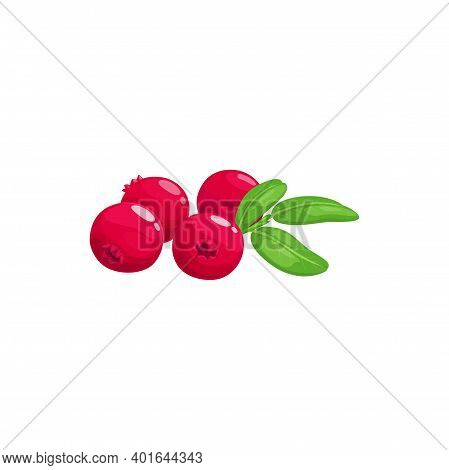 Cranberry Fruits Or Berries, Food From Farm Garden And Wild Forest, Vector Flat Isolated Icon. Cranb