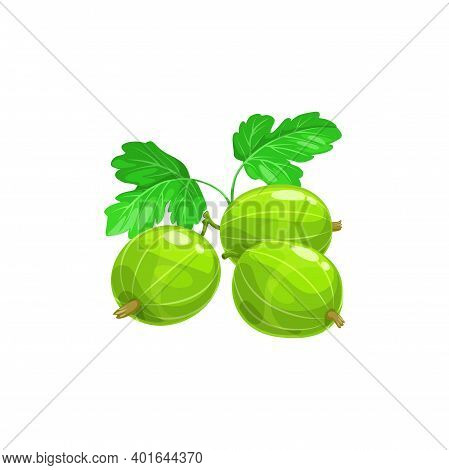Gooseberry Berries Fruits, Food From Farm Garden And Wild Forest, Vector Flat Isolated Icon. Goosebe