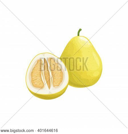 Pomelo Fruit, Tropical Exotic Citrus, Vector Isolated Food Icon. Pomelo, Pummelo Or Shaddock Fruits