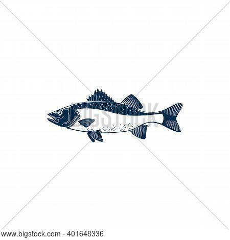 Sea Brass Isolated Common Fish Of Family Serranidae. Vector Barred Sand Bass, Potato Cod, Redbanded