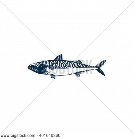 Mackerel Common Name Of Different Species Of Pelagic Fish, Family Scombridae. Vector Short Indian Ma