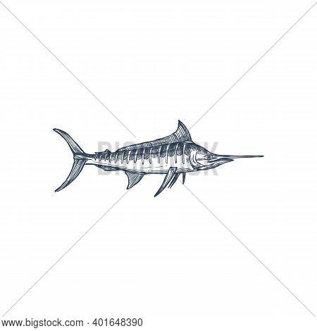 Broadbills Fish Sword Like Snout Isolated Swordfish Monochrome Icon. Vector Long Toms Marlin, Broadb