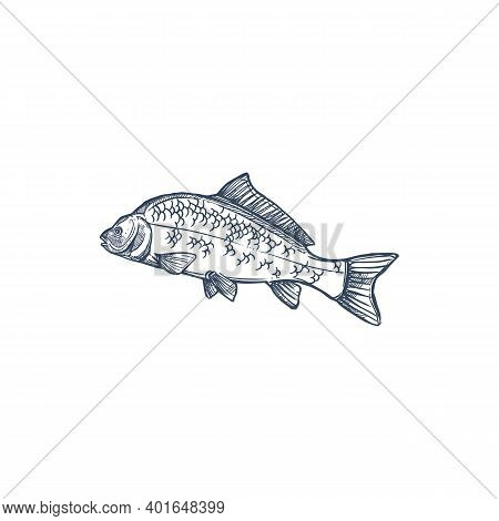 Carp Freshwater Fish Of Family Cyprinidae Isolated Monochrome Icon. Vector Common Silver Bighead Car