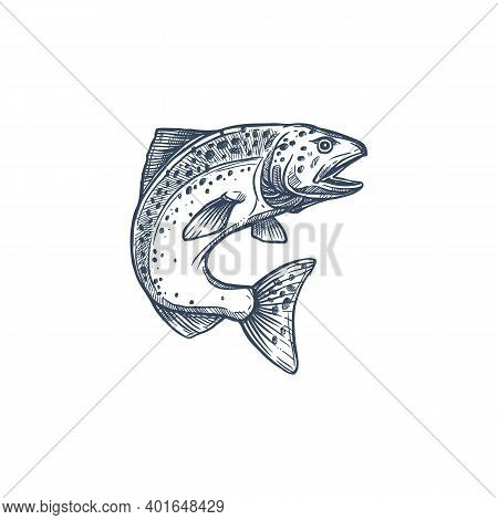 Atlantic Salmon Ray-finned Fish In Family Salmonidae Isolated Monochrome Sketch. Vector Trout, Char,