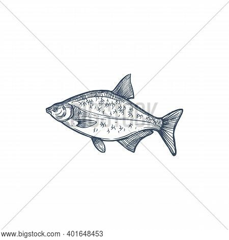 Bream Species Of Freshwater And Marine Fish Isolated Monochrome Sketch. Vector Abramis, Gilt Head Br