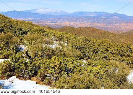 Chaparral Plants Surrounded By Snow On A Windswept Mountain Ridge Overlooking The High Desert Platea